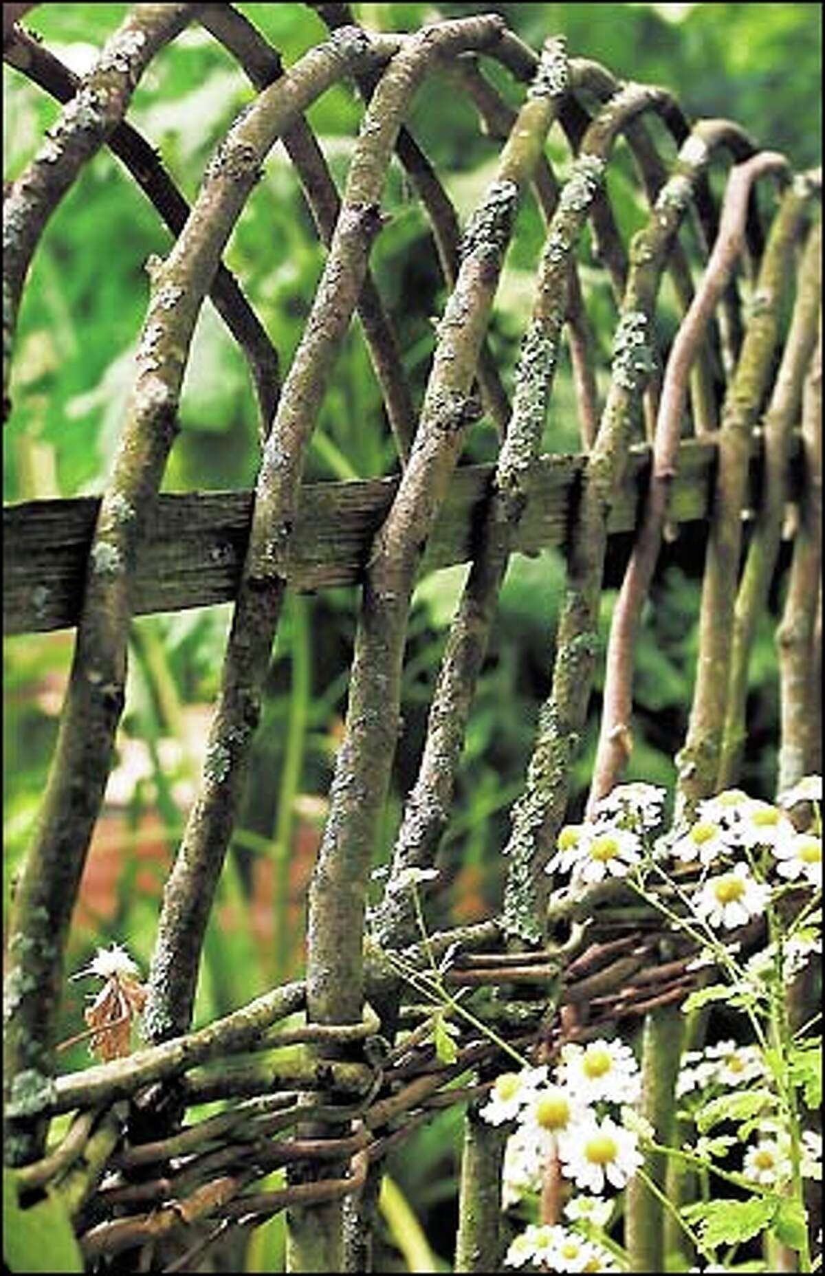 Spacing and form by Skelly turns a wattle fence from utilitarian into a work of art. Note the many angles represented through the use of cross-weaving and naturally bending branches.