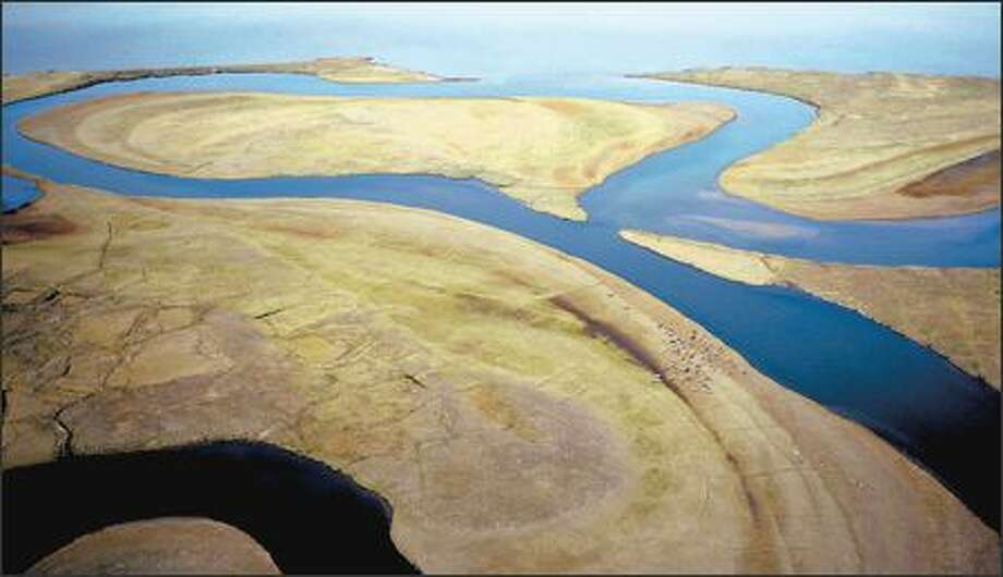 An aerial view of wetland areas and caribou, small dots at center right, on Lake Teshekpuk, Alaska. The Interior Department is set to open this vast area to new oil drilling. Photo: Associated Press / Associated Press