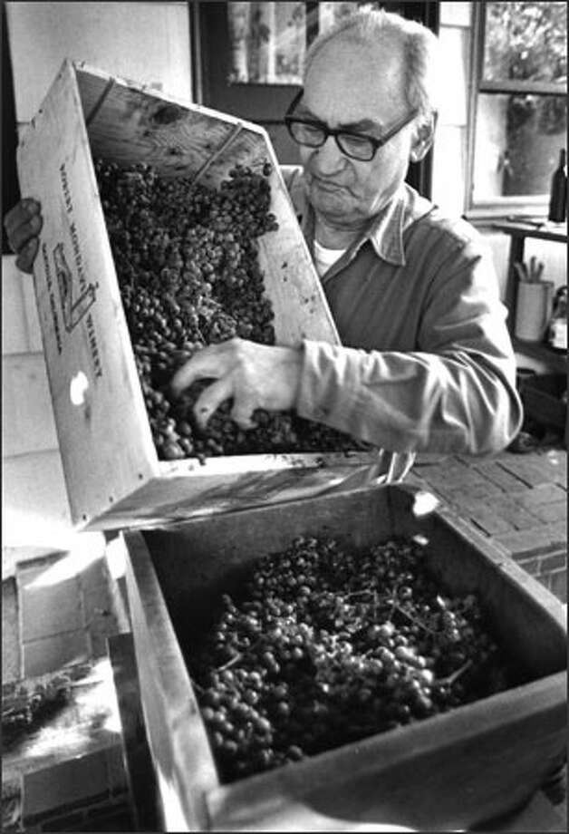 Angelo Pellegrini puts grapes, which were sent by Robert Mondavi, into his crusher during the process of making about 130 gallons of wine per year in his back yard. Photo: Seattle Post-Intelligencer / Seattle Post-Intelligencer