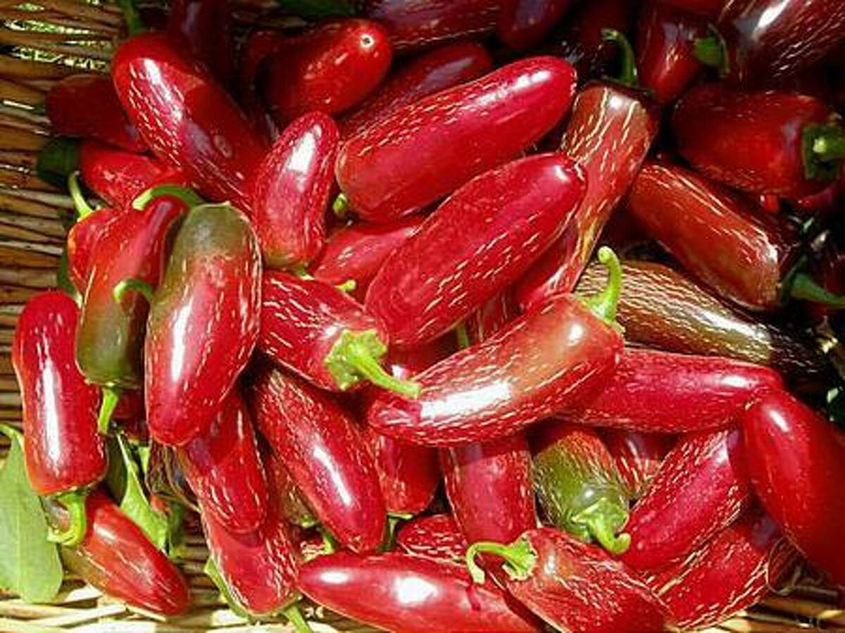 Chiles were cultivated in the Americas as long as 7,500 years ago.
