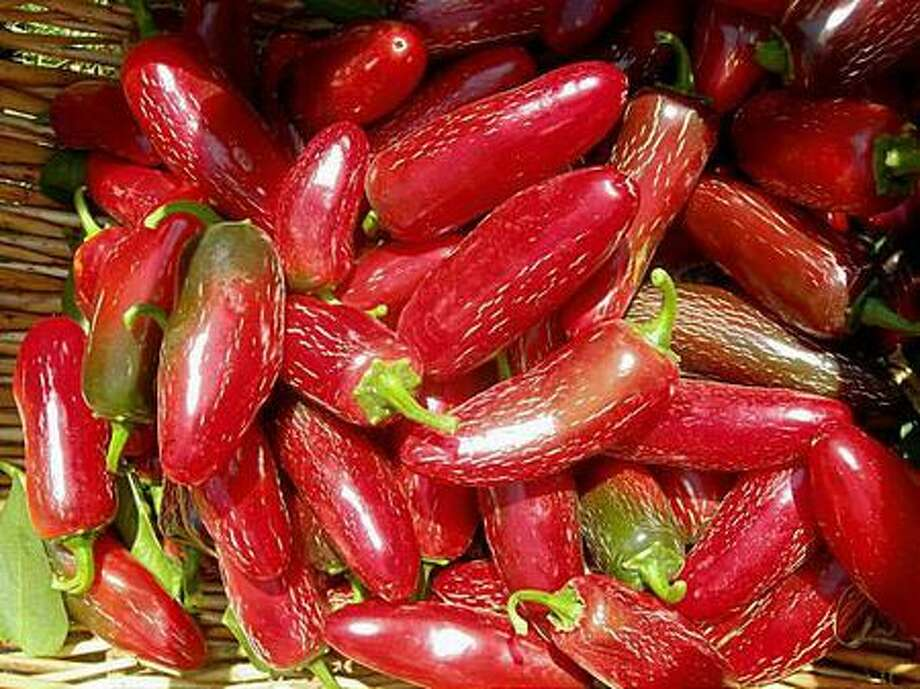 Chiles were cultivated in the Americas as long as 7,500 years ago. Photo: San Francisco Chronicle / San Francisco Chronicle