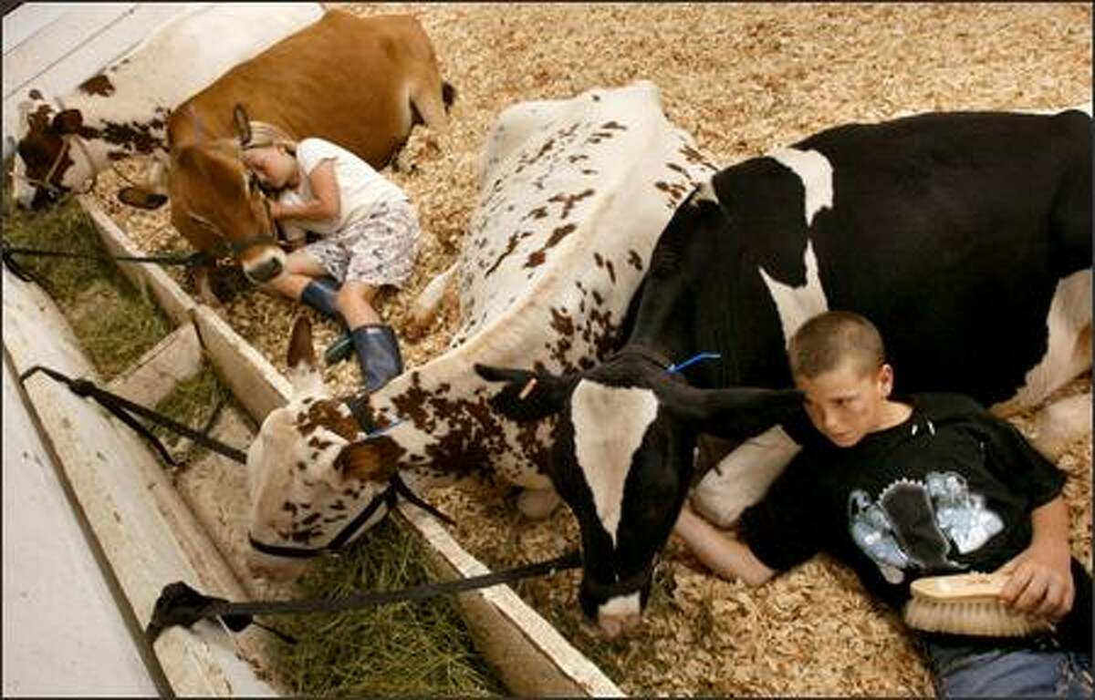 Ten-year-old Emily Beebe of Monroe and Jeremy Deline, 12, of Duvall snuggle with their cows in the dairy barn at the Evergreen State Fair in Monroe yesterday. Emily is with her Jersey cow Penny, and Jeremy is with his Holstein Inky. The kids will show their cows today and Monday. The fair began Thursday and runs through Sept. 6.