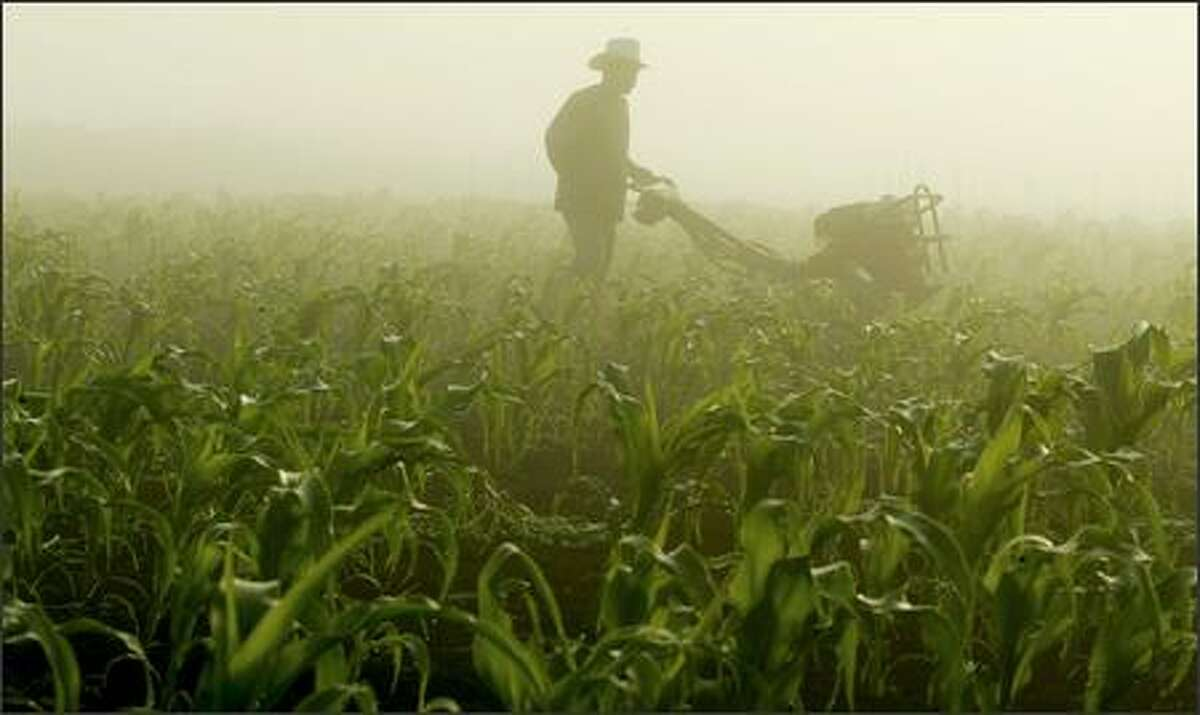 A late August fog shrouds Carlo Coroda as he rototills a cornfield at Charlie's Organic Produce in Snohomish.