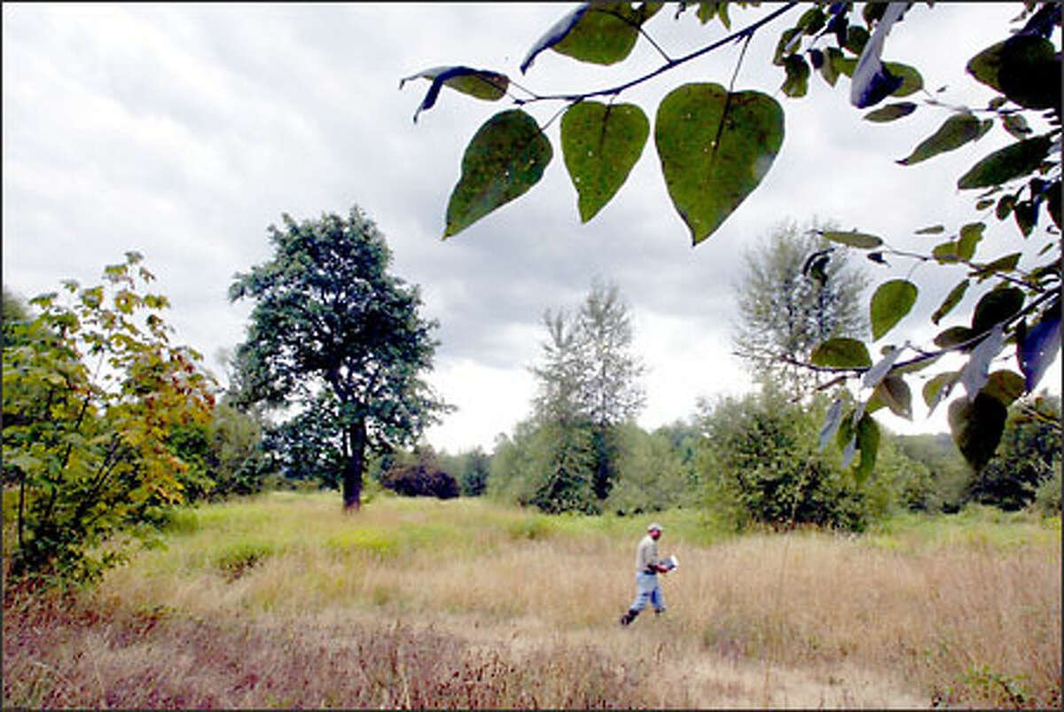 Chuck Adams of the Seattle Audubon Society surveys a field on the mostly dry Carnation Marsh near the community of Carnation recently.
