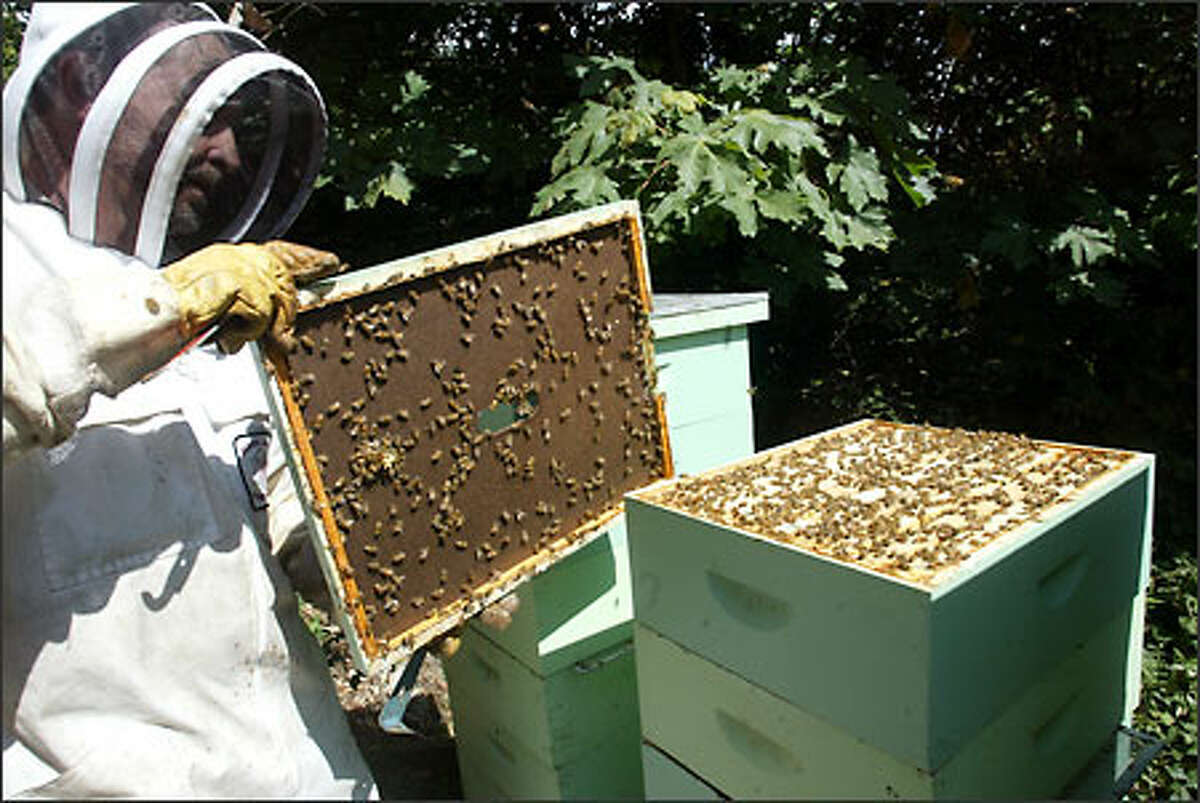 Tim Celeski removes a cover from one of four hives he keeps in his backyard. It takes 12 bees their entire lives, about 36 days, to produce one teaspoon of honey.