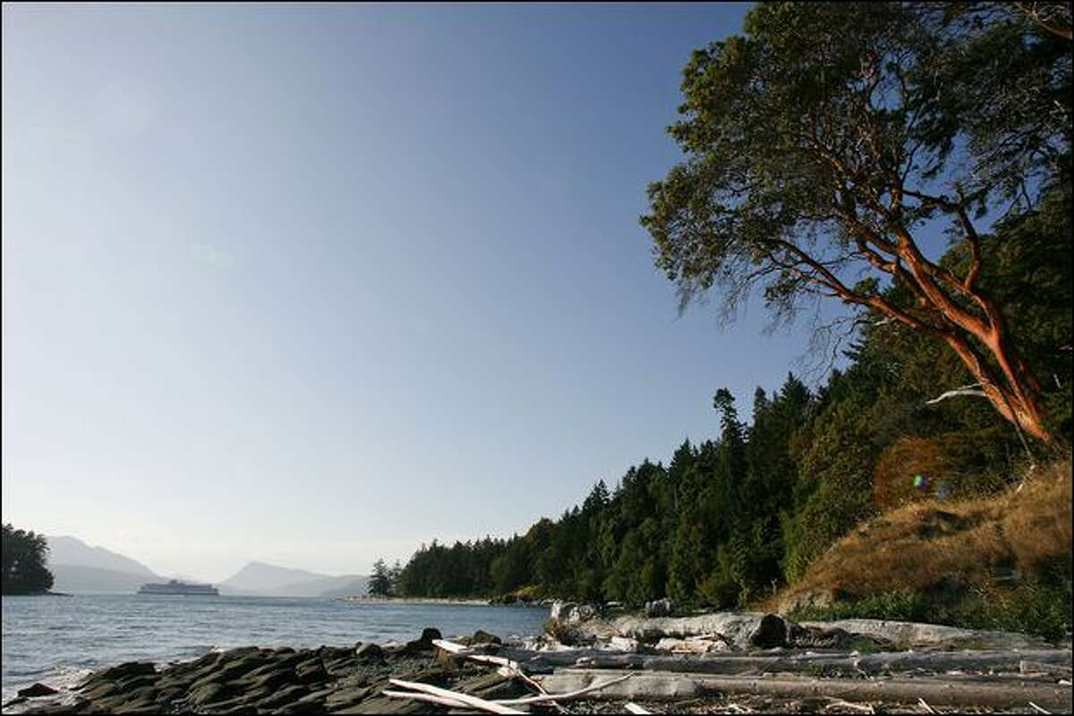A leggy madrone graces the shore of Portland Island as a B.C. Ferry passes in the distance.