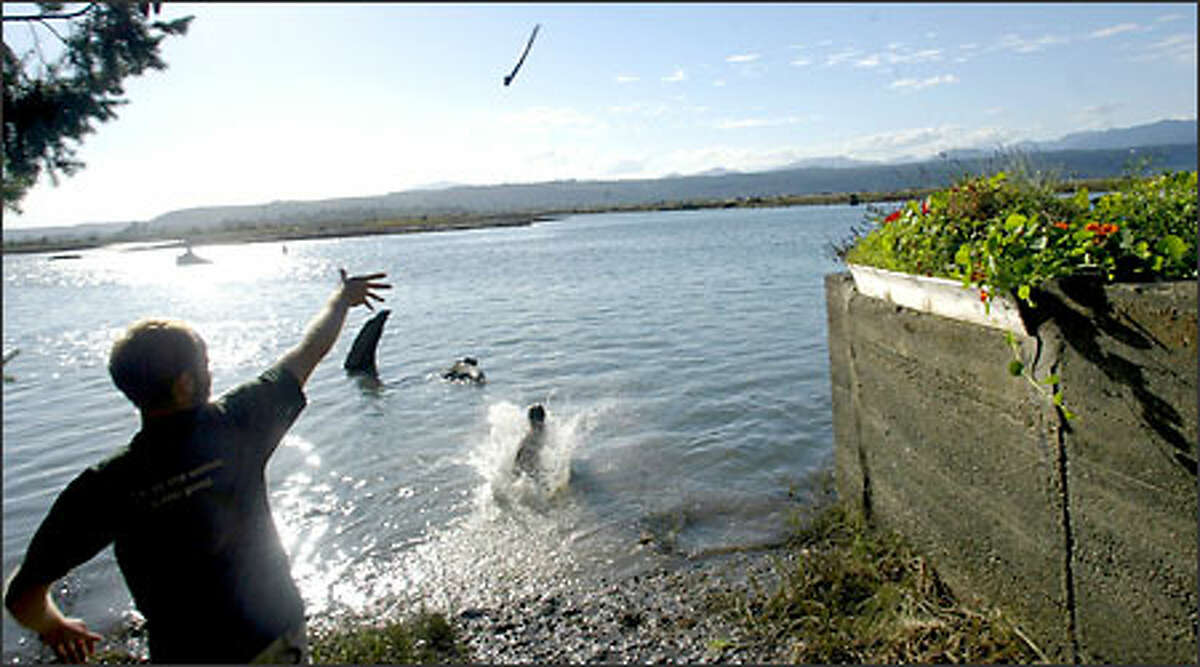 Eric Blegen throws a stick to his dog, Tucker, outside their home in Union, along the Skokomish Estuary off the Hood Canal where they have lived for 10 years. Blegen, like many canal residents, said he's concerned about the lack of oxygen in the water, which has forced the closure of most fishing.