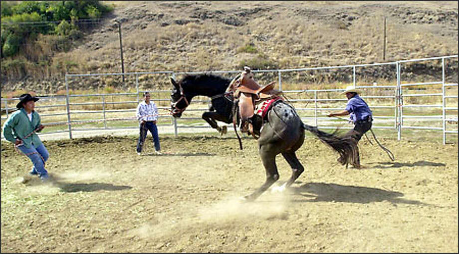 Sheldon Shebala, 24, left, works with his father, Rudy Shebala, 45, to control a Nez Perce horse as Carl Ray Powaukee, 17, center, waits with bridle in hand in Lapwai, Idaho. The horse is released in the round pen to exercise its flight instincts. It then becomes a test of wills between the horse and the rider for control. Photo: Associated Press / Associated Press
