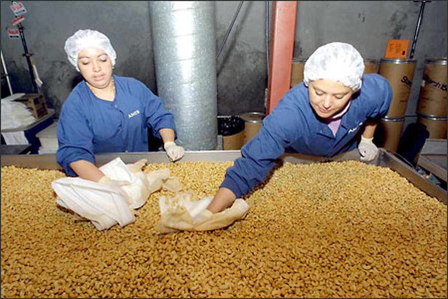 Ortencia Garival and Flor Garcia remove peanut oil from crisp cashews before the nuts are coated with chocolate at the AMES International Inc. plant in Fife. Photo: Phil H. Webber, Seattle Post-Intelligencer / Seattle Post-Intelligencer