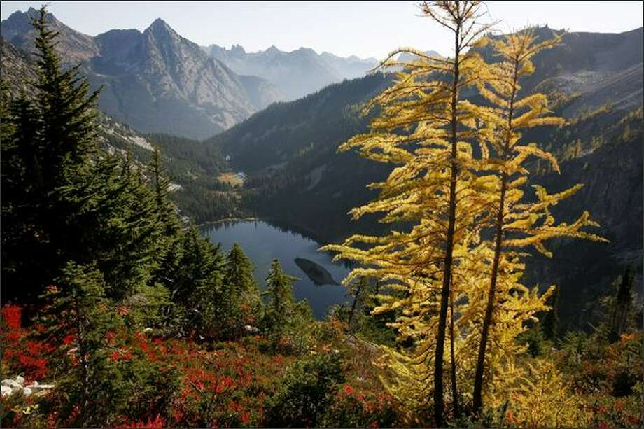 Above Lake Ann, on the hike to Maple Pass off the North Cascades Highway, the morning light intensifies the glow of a larch, a coniferous tree that in fall turns from green to gold and drops its needles. Photo: Paul Joseph Brown, Seattle Post-Intelligencer / Seattle Post-Intelligencer