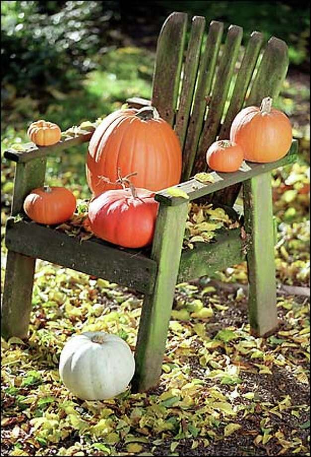 Pumpkin growing requires more patience than effort, but the rewards are numerous, whether you're decorating or devouring. Photo: Paul Joseph Brown, Seattle Post-Intelligencer / Seattle Post-Intelligencer