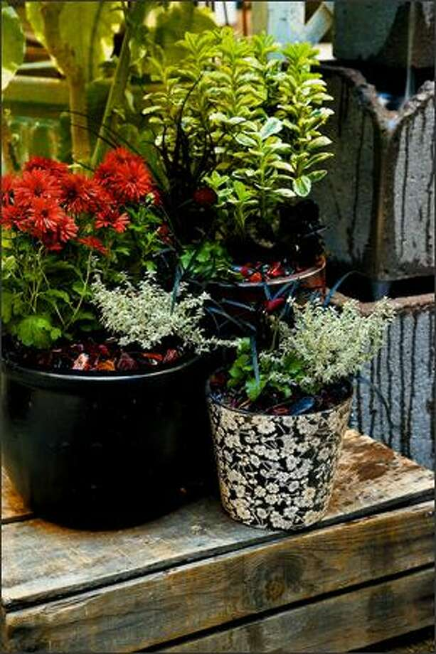 A mix of recycled, tumbled red glass and black stones echoes both the pots and the flowers and foliage of chrysanthemums, black mondo grass and deep red pansies. Photo: Andrew Buchanan