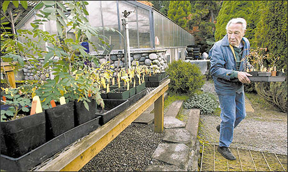 Steve Walker has volunteered at Washington Park Arboretum for the past 15 years. Keep the Arboretum in mind when looking for small specialty plants. Photo: Renee C. Byer, Seattle Post-Intelligencer / Seattle Post-Intelligencer
