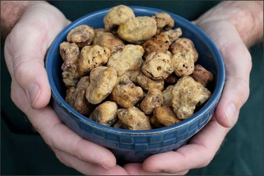 White Truffles from Alba, Italy, sell at DeLaurenti Specialty Food at Pike Place Market for $4000/pound. A medium size truffle costs approximately $50. Photo: Meryl Schenker, Seattle Post-Intelligencer / Seattle Post-Intelligencer