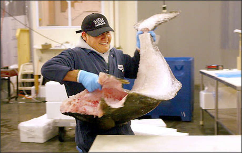 Reynaldo Santiago gets ready to fillet a halibut at Select Fish in South Seattle yesterday. With the acquisition by Whole Foods, all of Select Fish's workers are now employees of that Texas-based company. Select Fish handles seafood that is Marine Stewardship Council-certified sustainable. Photo: Phil H. Webber, Seattle Post-Intelligencer / Seattle Post-Intelligencer