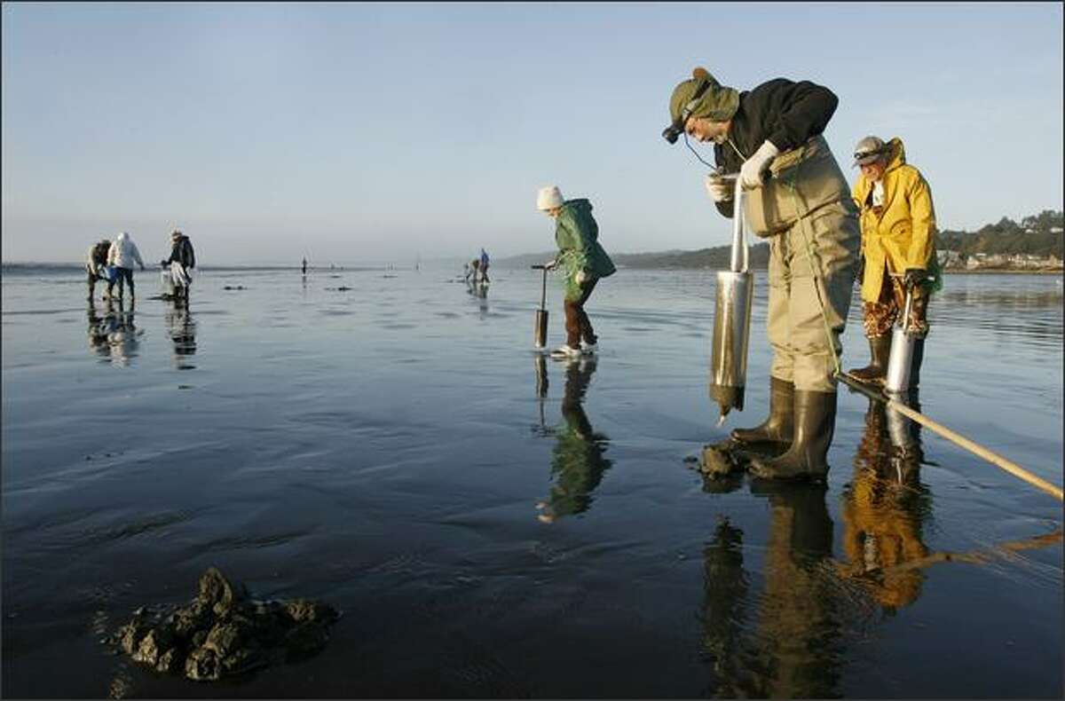 Erling Birkland and Delores and Charles Stewart of Yelm, Wash., pursues razor clams in Moclips, Wash.