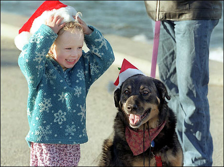 The classic Christmas story of girl meets bear: Alexandra Sova, 3, greets Bear on Alki Beach on Christmas Day while there enjoying the sun with her parents. Perhaps it was their similar taste in hats that drew them together. The Sova family just moved to Seattle from New York City. Bear is leashed to Sean Kuhlmeyer. Photo: Meryl Schenker, Seattle Post-Intelligencer / Seattle Post-Intelligencer