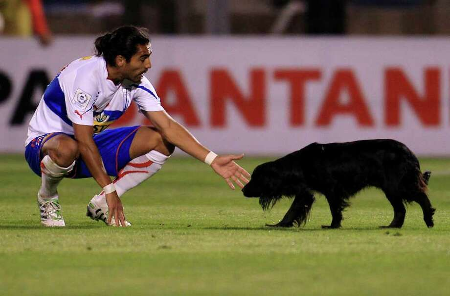 Chile's Universidad Catolica's Juan Eduardo Eluchans tries to catch a dog during a Copa Libertadores soccer match against Argentina's Velez Sarsfield in Santiago, Chile, Thursday, April 7, 2011. Photo: AP