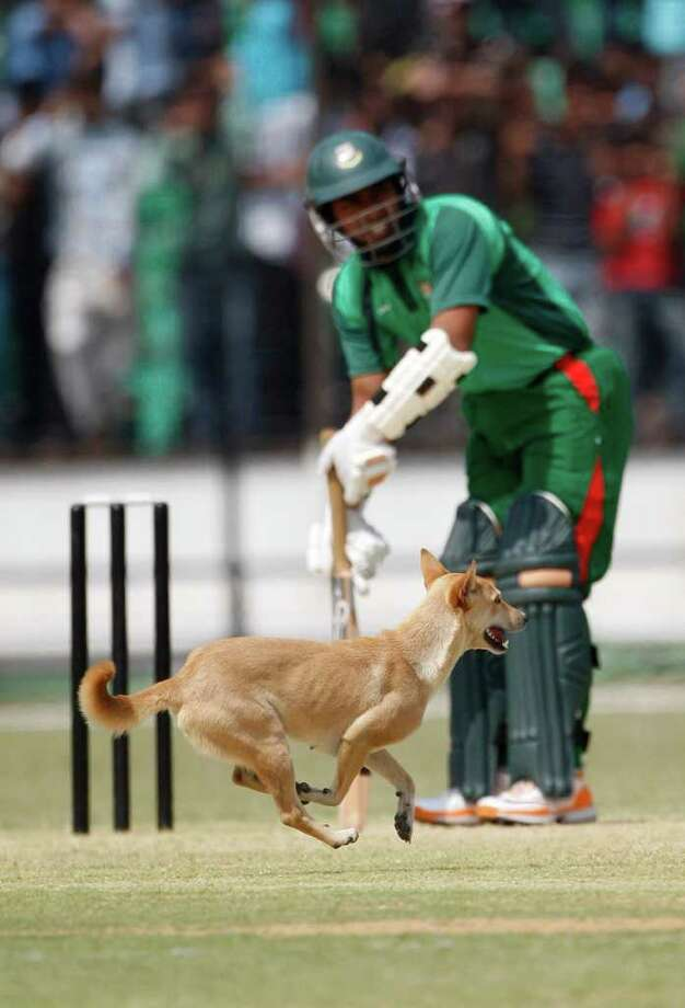 Bangladesh Cricket Board XI  batsman Rakibul Hasan takes guard as a stray dog crosses the pitch during a warm up match against Australia at Fatullah, outskirts of  Dhaka, Bangladesh, Thursday, April 7, 2011. Photo: AP
