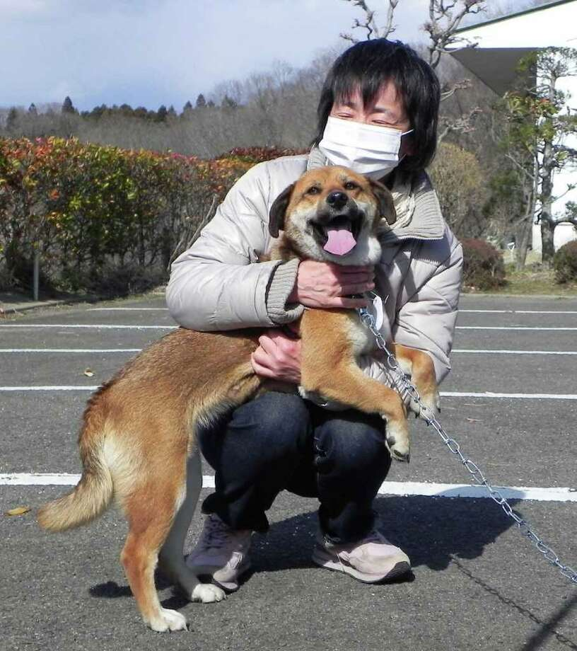 A woman named Onodera and dog Ban react as they are reunited at an animal shelter in Tomiyamachi, Miyagi prefecture, northern Japan Monday, April 4, 2011. Ban, rescued from drifting ocean debris immediately jumped to her owner and wagged her tail at their reunion more than three weeks after Japan's tsunami.  Photo: AP Photo/Nikkan Sports,  Hirotaka Yoshimoto
