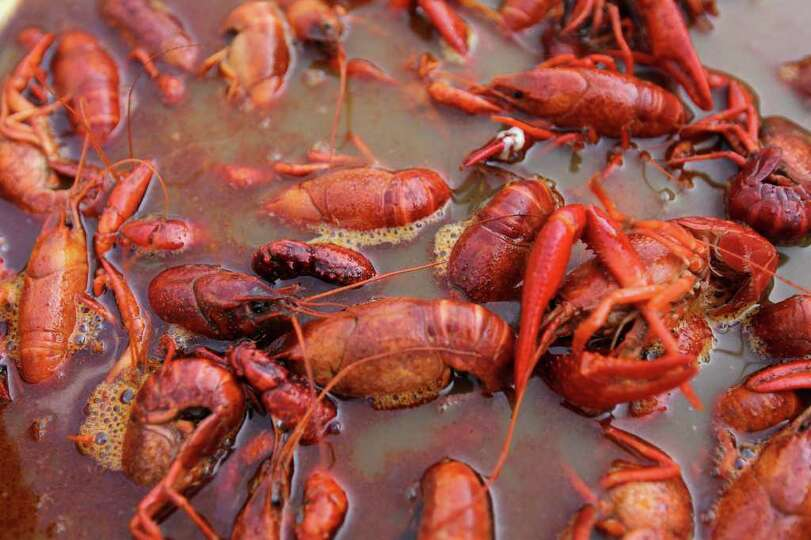 Cooked crawfish from Beaumont sit in the boiler at Chris's Cajun Crawfish during Taste of New Orlean