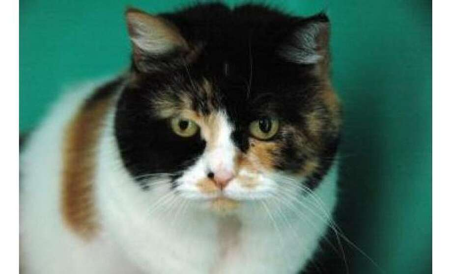Madonna: Domestic Medium Hair / Mix, Female | Small, 13 years, 3 months