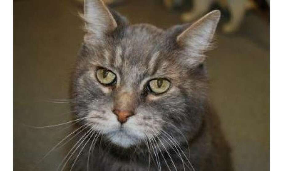 Oscar: Domestic Medium Hair / Mix