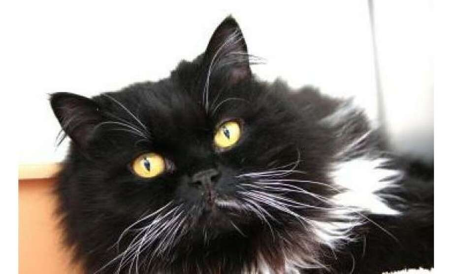 Jordan: Domestic Medium Hair / Mix, Female | Small, 12 years, 2 months