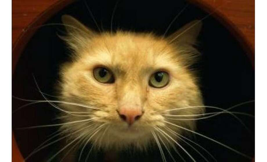Baby: Domestic Longhair / Mix, Male | Small, 