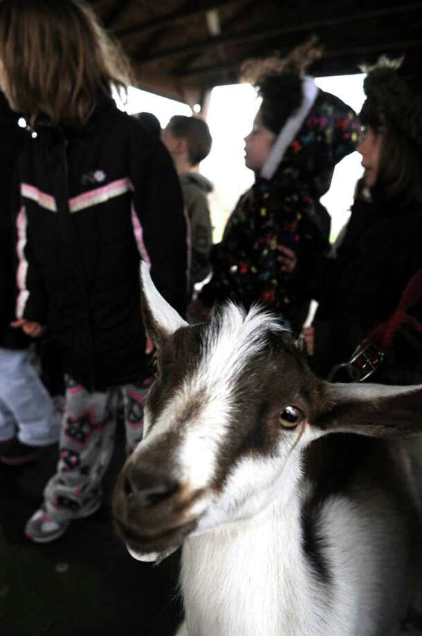 Baby goat Clyde pays a visit to Bradley School in Derby, Conn. Tuesday, April 12, 2011.  Derby Superintendent StephenTracy raises goats on his farm in Goshen and brings them to visit students at Bradley and Irving schools each year. Photo: Autumn Driscoll / Connecticut Post