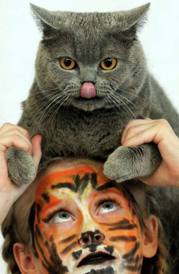 A girl holds her cat during the fifteenth annual International cats exhibition in Minsk. Photo: AFP/Getty Images