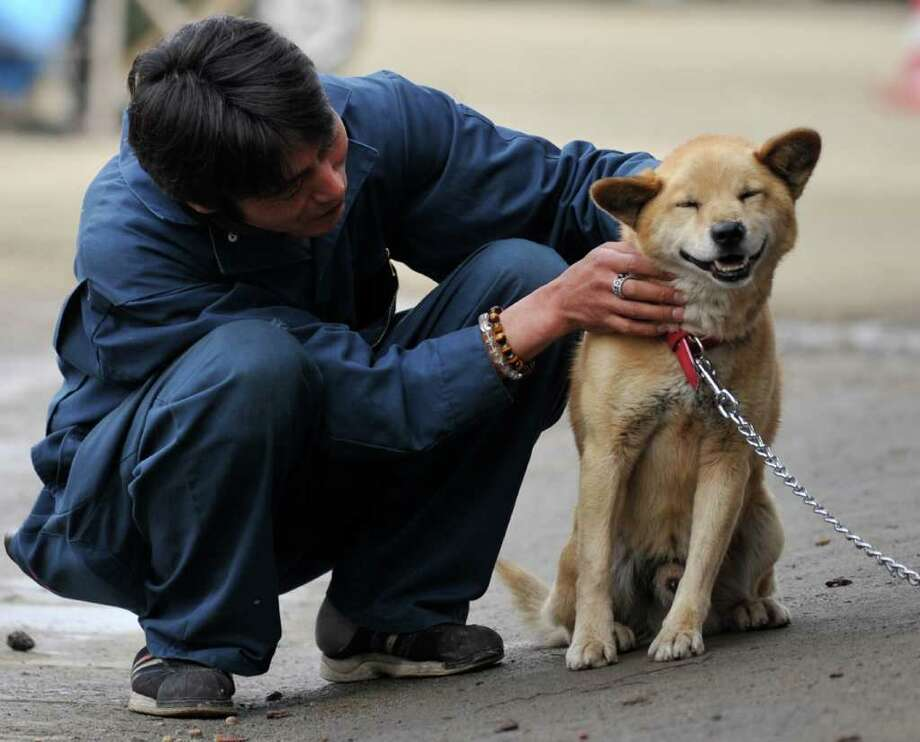 An evacuee pets a dog at a shelter in Rikuzentakata, Iwate prefecture. Photo: AFP/Getty Images