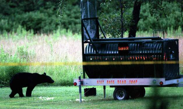 A black bear named Bella, looks into a trap but doesn't take the bait in the backyard of a home on Lake Rd. in Orchard Park, N.Y., Monday, July 12, 1999.The bear has been wandering around in the Orchard Park area for nearly a week and Department of Environmental Conservation officers have been unable to capture it for release in the Allegany State Park. (AP Photo/Mark Mulville) Photo: MARK MULVILLE / BUFFALO NEWS