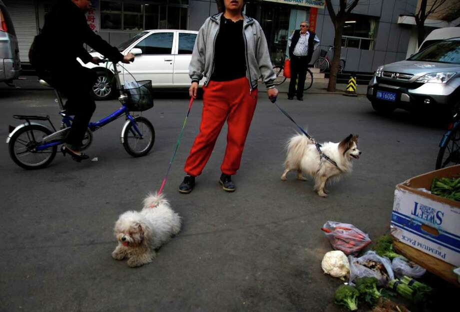 A woman walks her dogs along the streets of Beijing Monday, April 11, 2011. Photo: AP