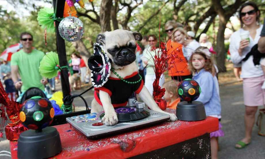 """Chewy,"" owned by Jesse Ortiz, 13, rides atop a DJ themed float during the Fiesta Pooch Parade in Alamo Heights, Texas on Saturday, April 16, 2011. Photo: ALICIA WAGNER CALZADA, SPECIAL TO THE EXPRESS-NEWS / Alicia Wagner Calzada"
