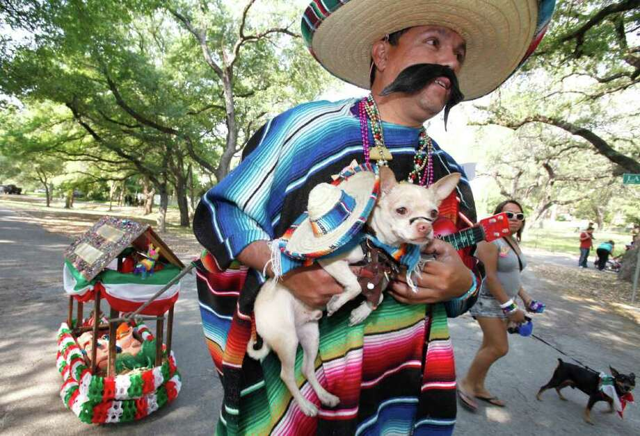 "Ernest Vallejo walks with his chihuahua, ""Conchito"" during the Fiesta Pooch Parade in Alamo Heights, Texas on Saturday, April 16, 2011. Photo: ALICIA WAGNER CALZADA, SPECIAL TO THE EXPRESS-NEWS / Alicia Wagner Calzada"