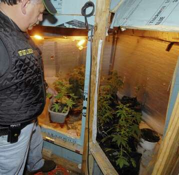 "Sgt. Leonard Crouch, the Albany County Stop-DWI coordinator, looks at marijuana plants seized when two people were arrested in a 2006 raid in Coeymans. Sheriff's officials said drug seizure funds were used to buy Crouch a ""take-home"" Toyota SUV because he occasionally assists in drug raids. (Skip Dickstein / Times Union)"