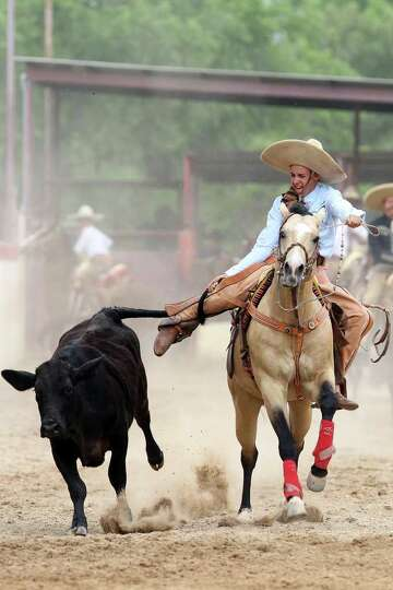 A charro competes in the coleadero  or steer tailing event during the Fiesta Charreada at the San An
