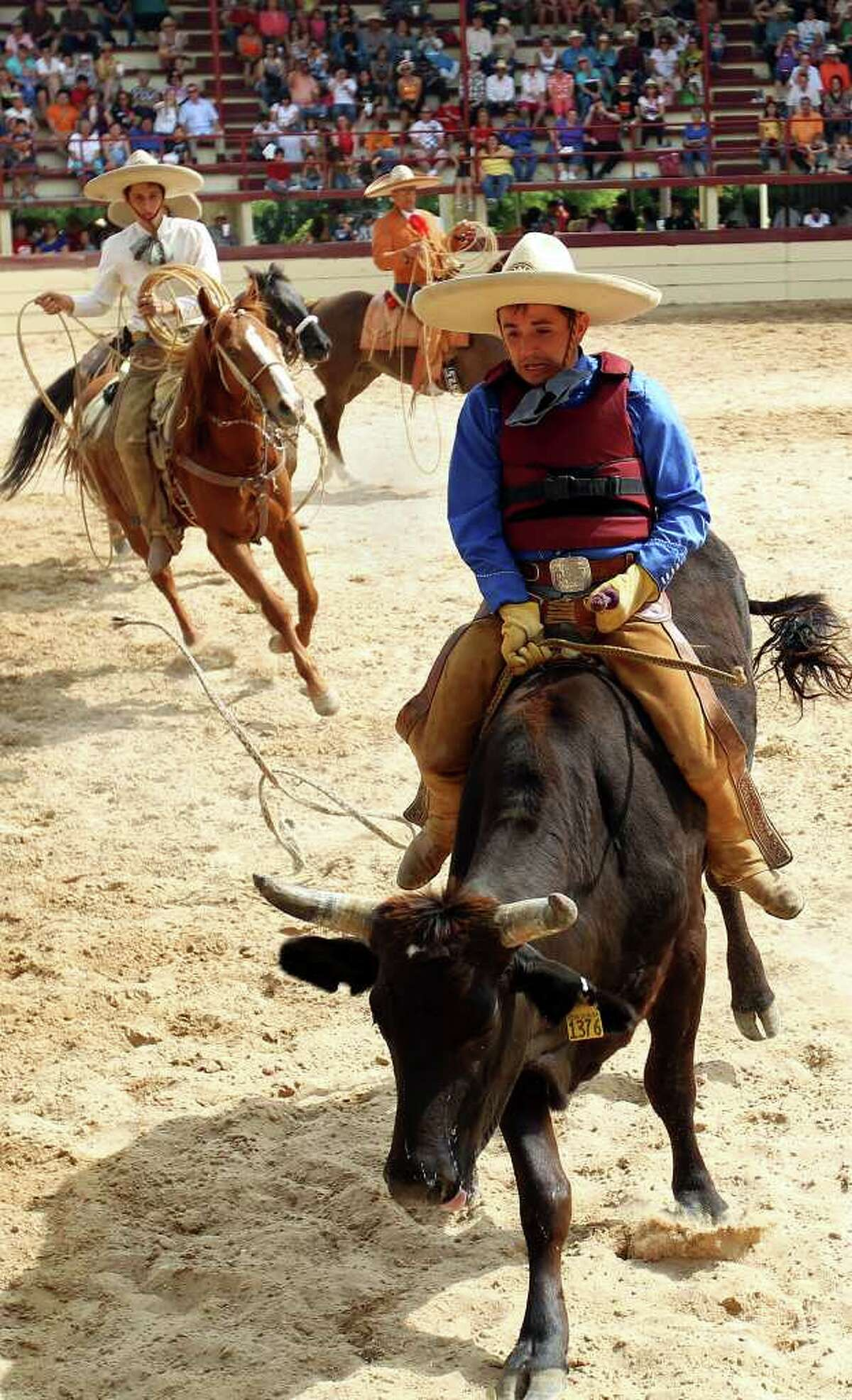 Bull rider Augustine Cervantes nears the end of his ride during the Fiesta Charreada at the San Antonio Charro Ranch, Sunday, April 17, 2011. (Jennifer Whitney/ Special to the San Antonio Express-News)
