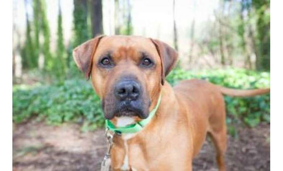 Sheenin: Boxer / Mix, Male | Medium, 8 years