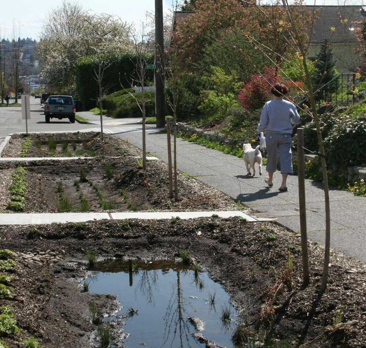 Ballard's city-installed rain gardens turn into cesspools.