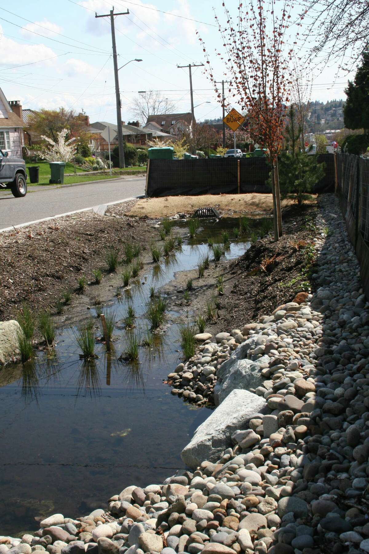 Rain gardens in Ballard have become muddy ponds, not the green solution to runoff the city had hoped. (Photo by Rita Hibbard)