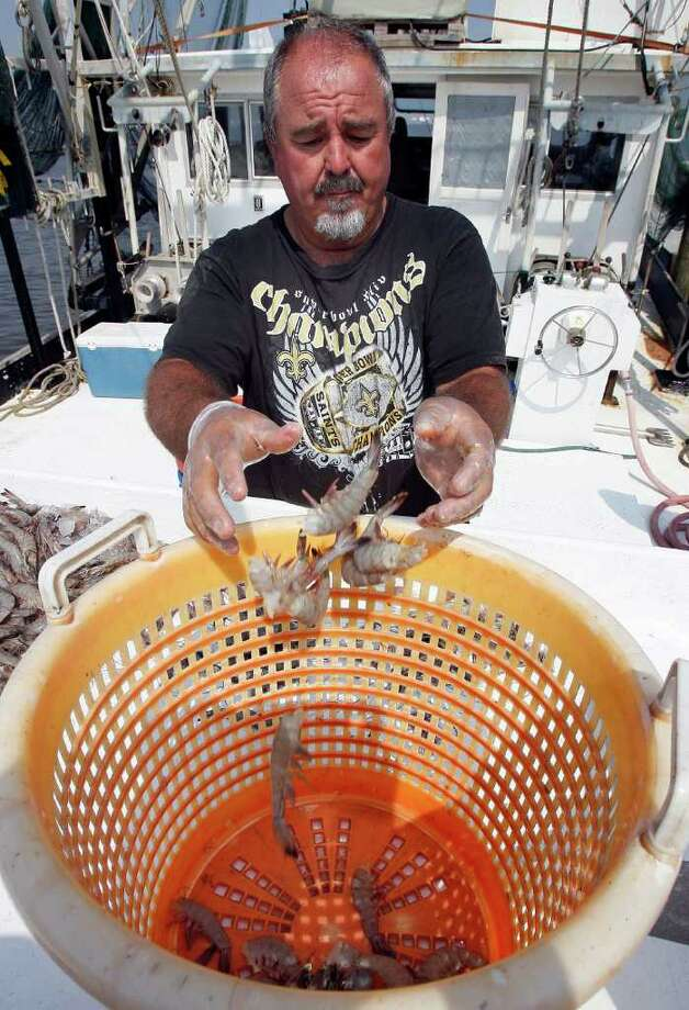 Commercial fisherman Ted Petrie tosses shrimp that he caught into a bucket on his boat in Grand Isle, La., Wednesday, April 20, 2011. Petrie took a job helping with Deepwater Horizon oil spill response efforts in order to make ends meet when local waters were closed to fishing. A year after the spill began, he wonders about its long term effects on marine life and is apprehensive about his odds for success in future shrimp seasons. (AP Photo/Patrick Semansky) Photo: Patrick Semansky