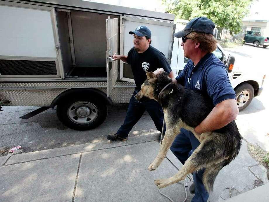City of San Antonio Animal Care Services workers Gabriel Silva (left) and Frank John Ayala load a dog into their truck near Edison High School. Photo: Edward A. Ornelas/Express-News / SAN ANTONIO EXPRESS-NEWS (NFS)