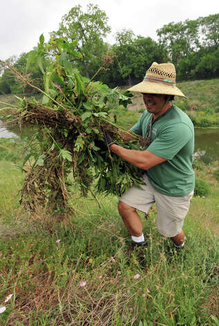 Jason Rose carries weeds and brush away from the San Antonio River near Roosevelt Park as part of the Armed Forces Earth Day campaign on Tuesday, April 19, 2011. The site south of downtown was chosen for the cleanup because litter from Fiesta revelry tends to collect there. Photo: Robin Jerstad/Special To The Express-News