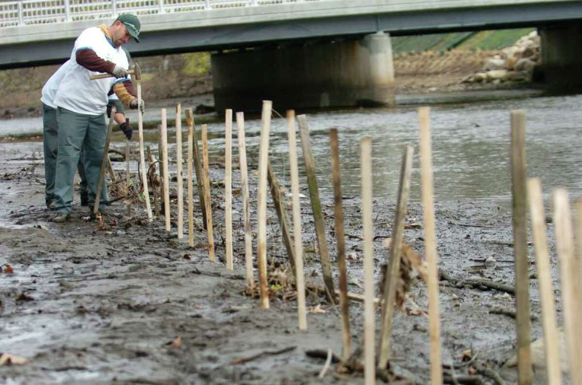 Javier Ramirez hammers in a stake as employees from Eastern Land Management build a protective fence along the Mill River to keep the geese out of the salt marsh restoration area in Stamford, Conn. on Friday April 22, 2011.