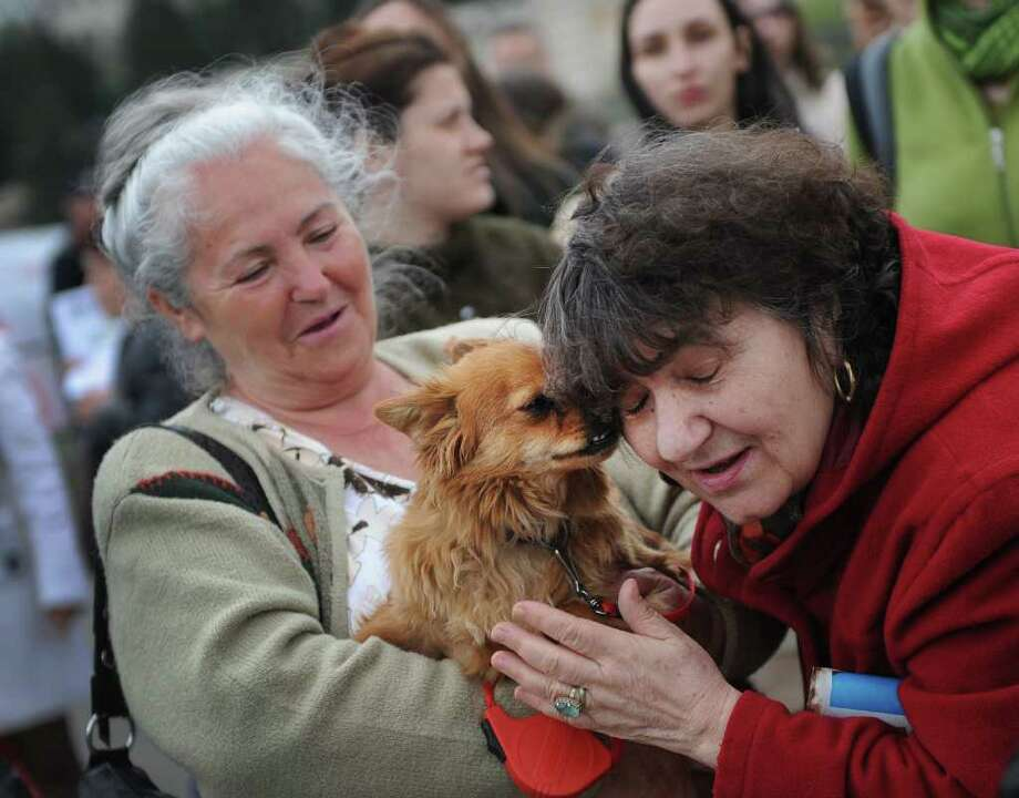 People demonstrate with their dogs in front of the Romanian parliament building in Bucharest on April 18, 2011, to protest against a law to restart the killing of stray canines. Photo: AFP/Getty Images