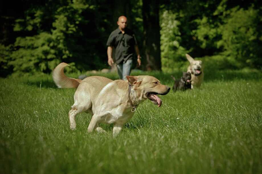 Actuel Dogs hotel owner Stan Burun exercises resident dogs outdoors on April 19, 2011 in Vincennes, France. Opened in November 2010 by Devi and Stan Burun, Actuel Dogs is a five-star luxury hotel for dogs with two single rooms and two suites. Photo: Getty Images