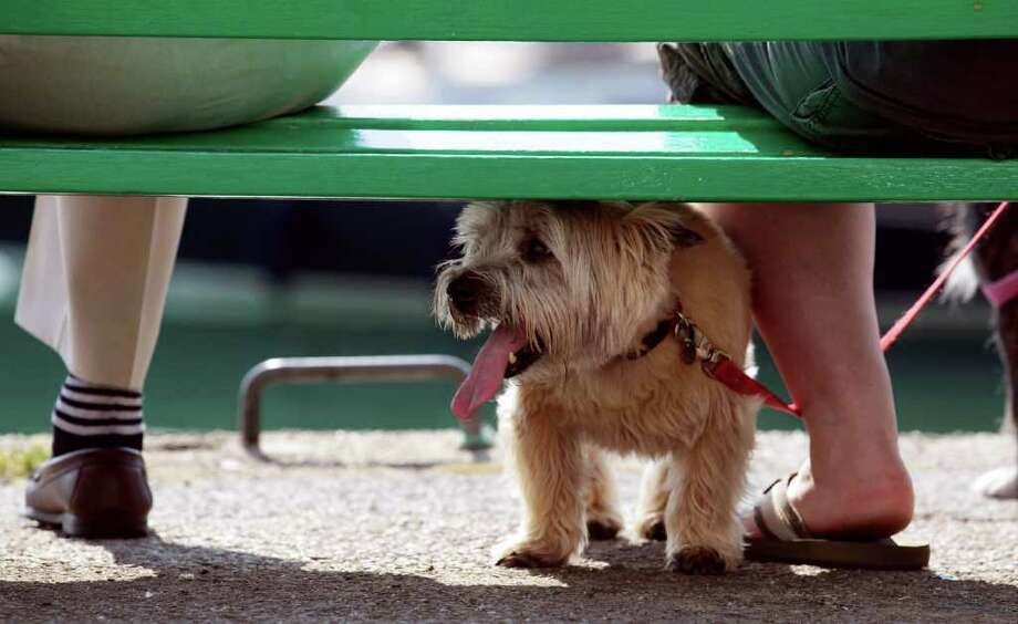 A small dog cools off in the shade as its owners enjoy the fine weather besides the harbor in Padstow on April 20, 2011 in Cornwall, England. Photo: Getty Images