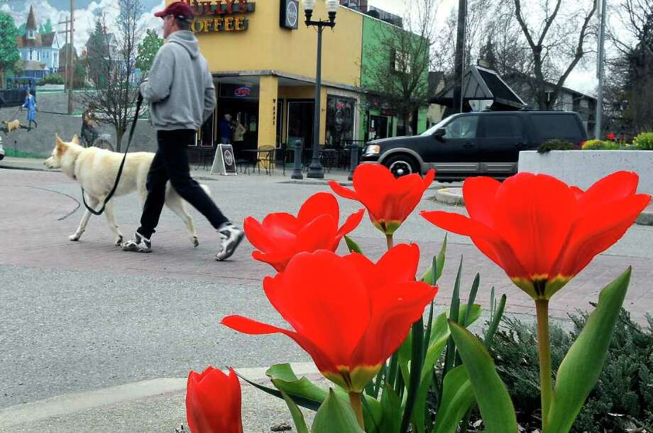 Tim Treed, 51, and his dog, Trax, 4, take a stroll past tulips at the intersection of Cannon and Pacific in Browne's Addition, Wednesday, April 20, 2011 in Spokane, Wash. while on their way to collect rent from properties that Treed manages.  Photo: AP
